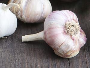 garlic-300