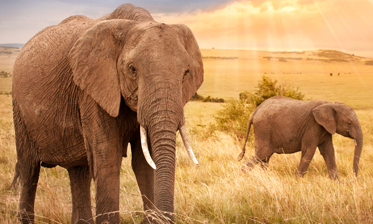 Why Elephants Avoid Cancer